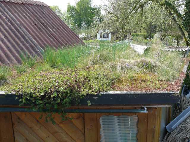 3_Yogaraum Dachbegrünung_april09 (1).jpg