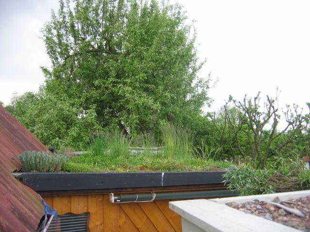 4_Yogaraum Dachbegrünung_durcheinander 027.jpg