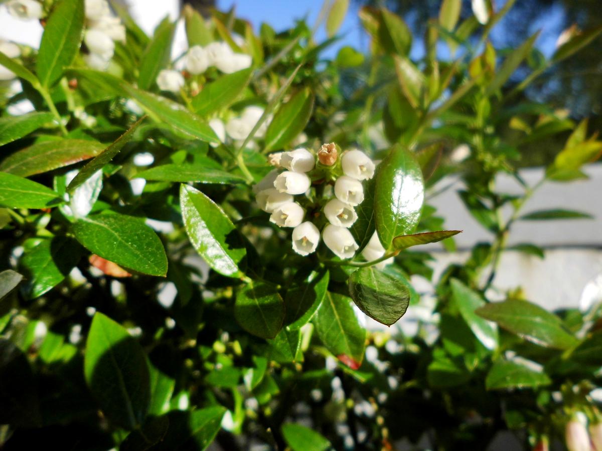 Berrybux-flowers.jpg