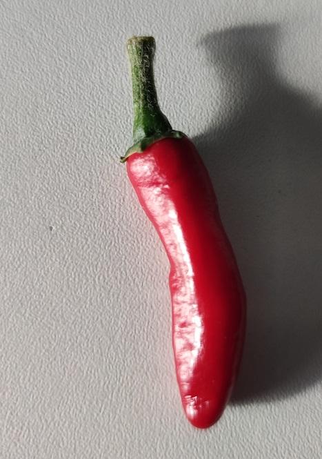 chili5.jpg