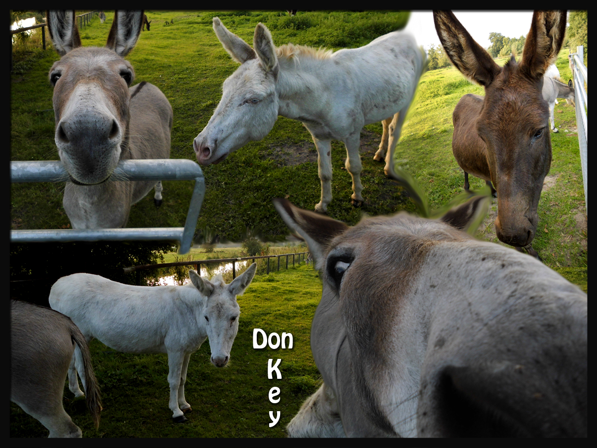 Don_Key.jpg