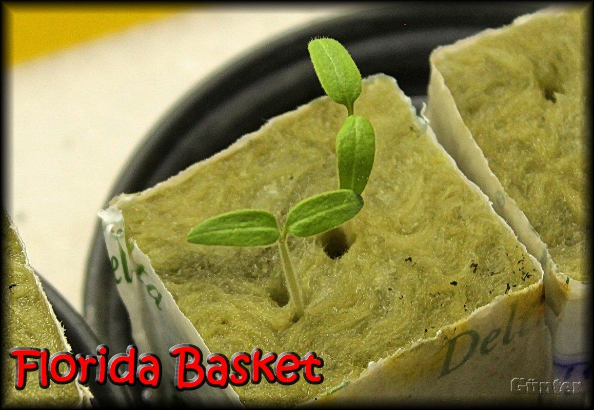 Florida Basket.JPG