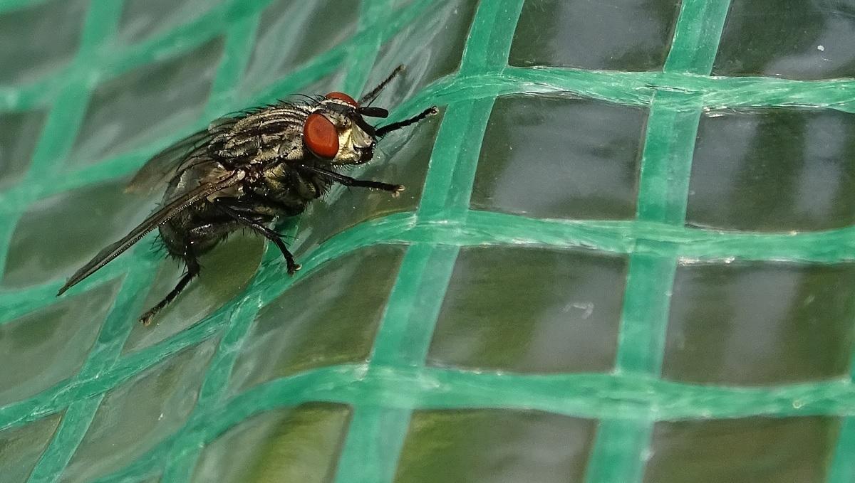 fly 3.jpg