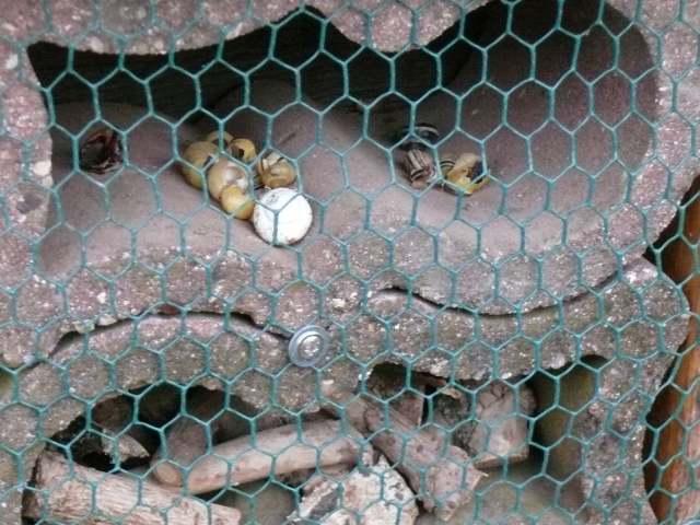 Insektenhotel Ökostation Bergkamen 015.jpg
