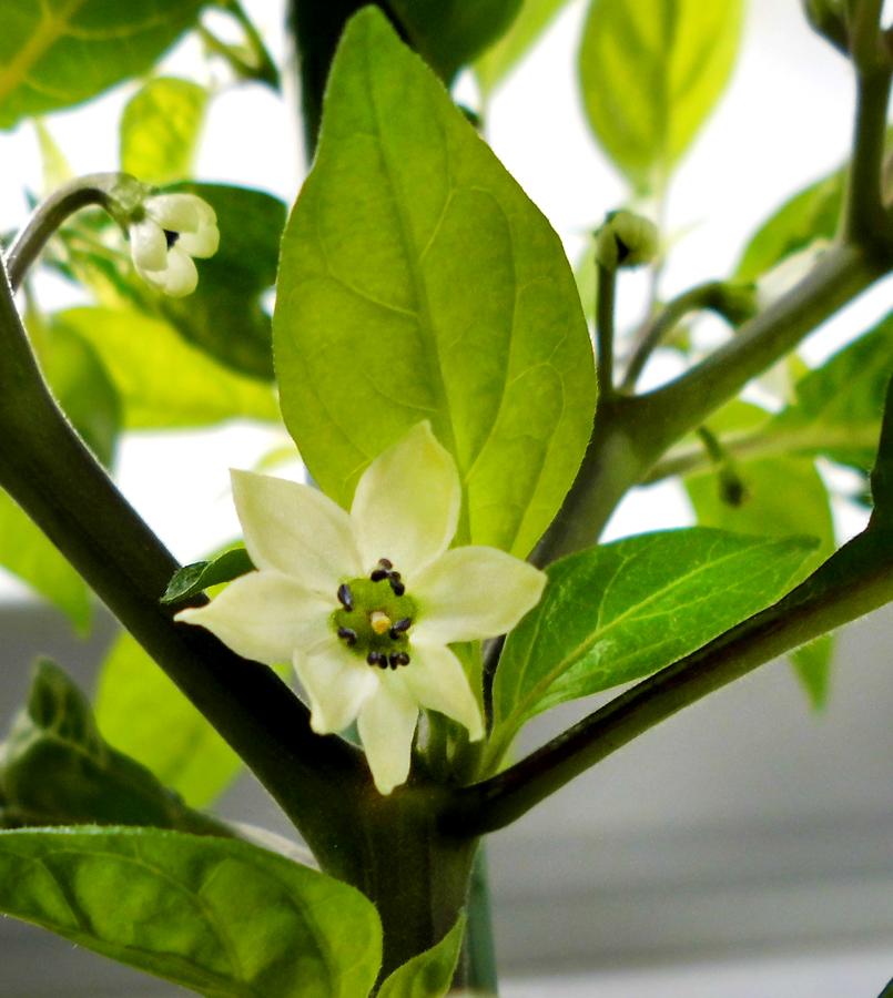 OL_flower-2.jpg