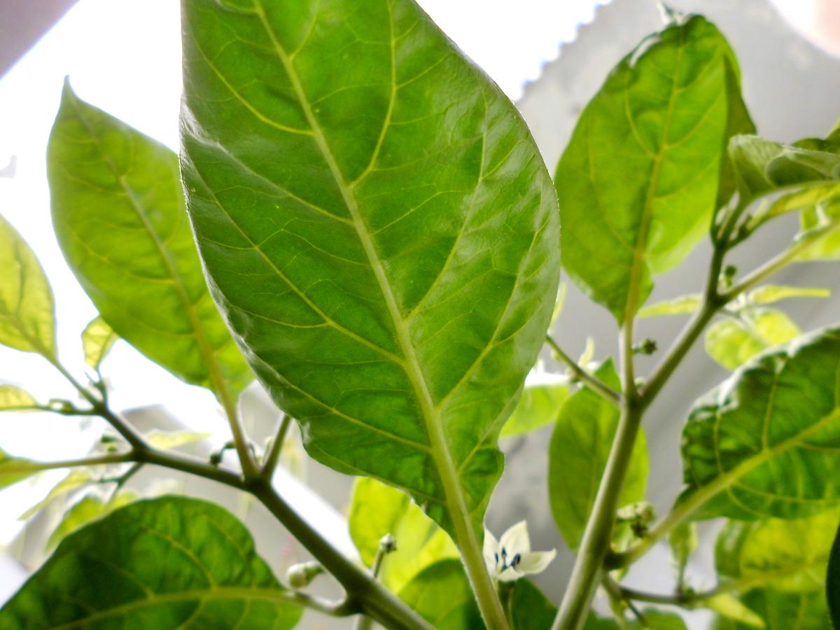 OL_leaf-below.jpg