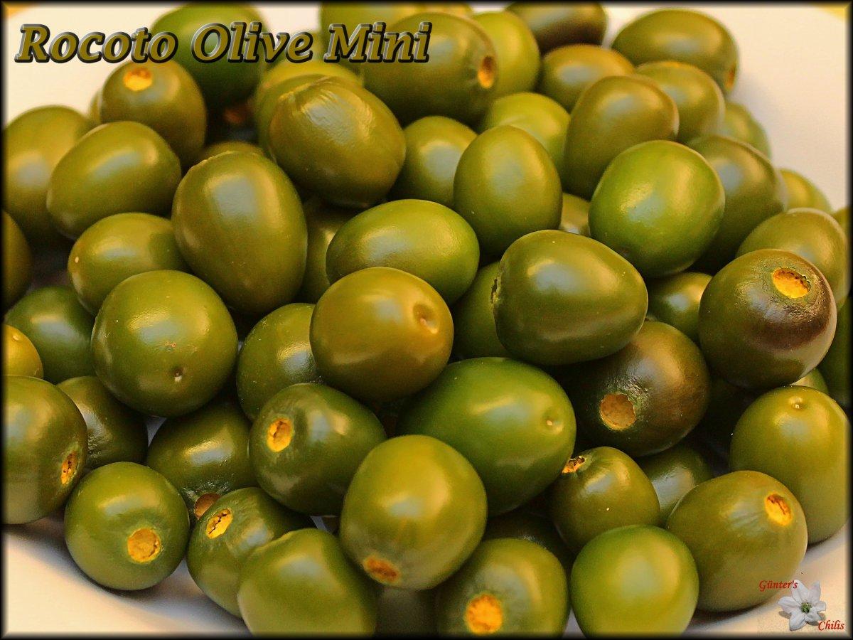 Olive Mini Ernte 09112019.JPG