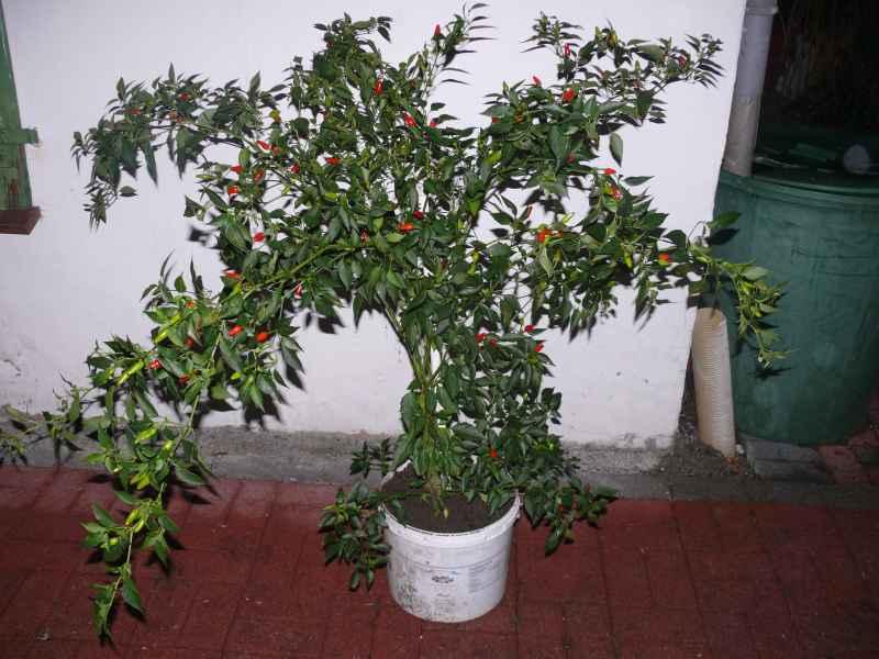 P1170452 so genannte Enchilada.jpg