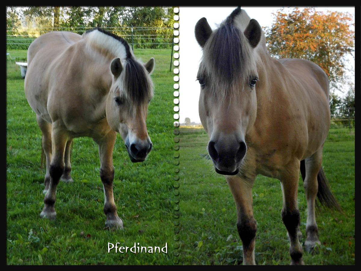 Pferdinand-2b.jpg