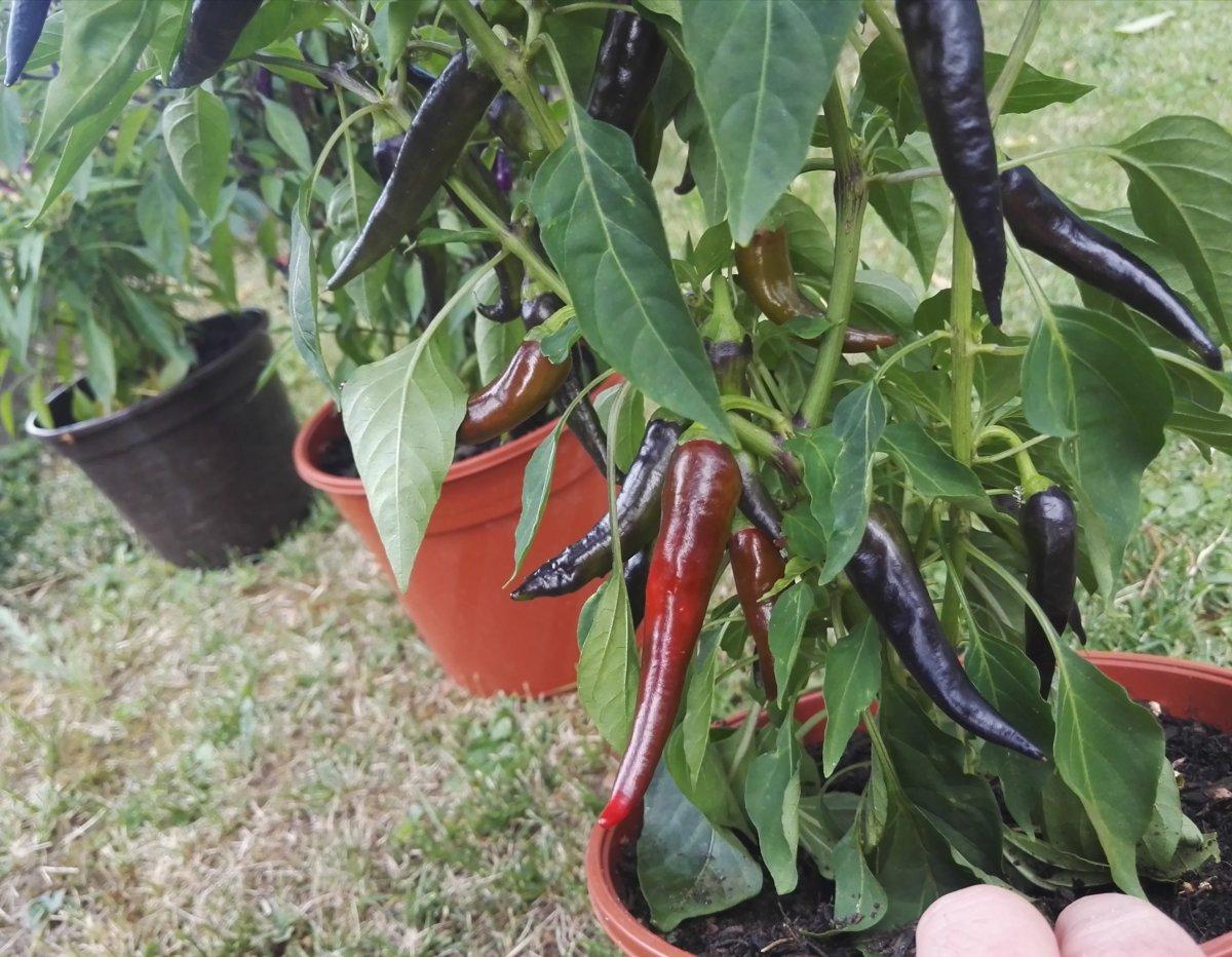 Pflanze2_2017_.jpg