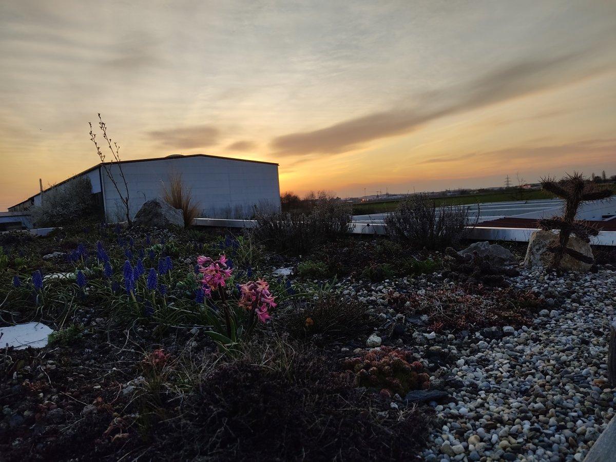 Sonnenuntergang Gartenhaus Dach.jpg