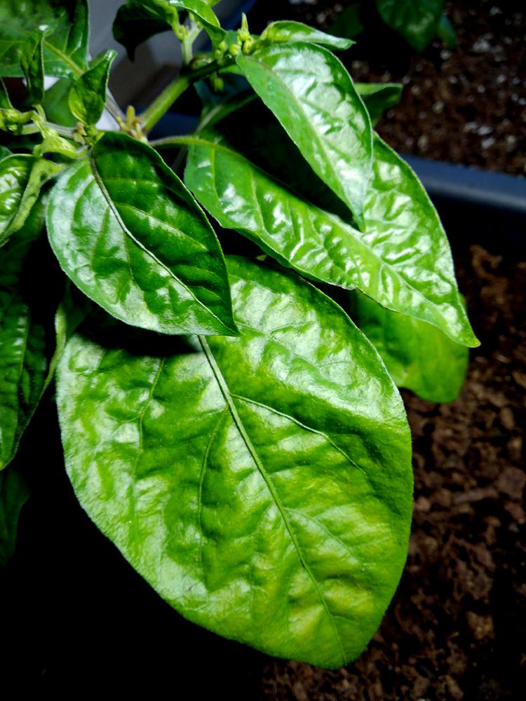 Tropical-Red_Blatt-1.jpg