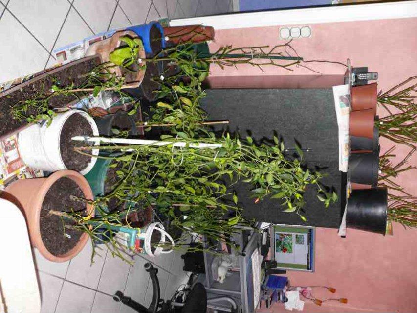 ÜW-Pflanzen nach Rückschnitt im WZ.jpg