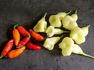 Aji White Pepper and Unknown Chilis